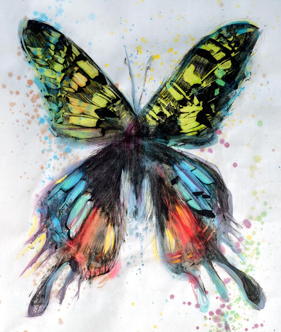 Butterfly Oil Study